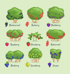 cartoon images berry bushes vector image