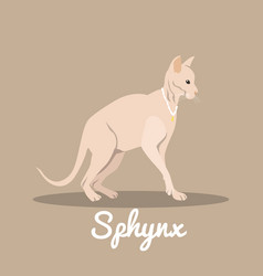sphynx cat with necklace design vector image