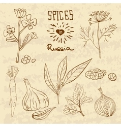 Spices in Russia A collection of distinctive vector image