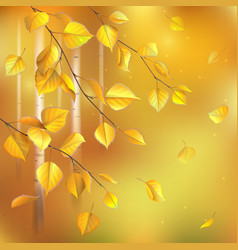 Birch leaves autumn vector image