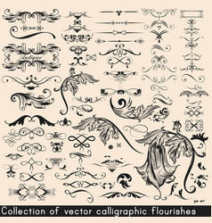 collection or set of vintage flourishes vector image