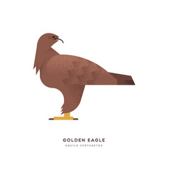 golden eagle wild animal on isolated background vector image