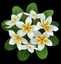 Plumeria tropical bouquet vector