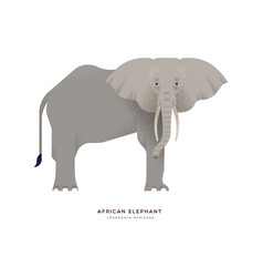 African elephant wild animal isolated background vector