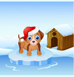 christmas dog on an ice floe vector image