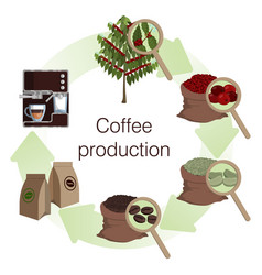 Infographics process and stages coffee vector