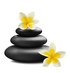 Plumeria flowers and zen stone vector