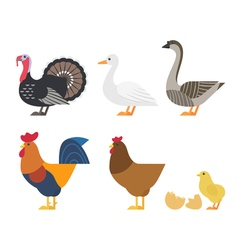 Set of Colorful farm bird icons vector