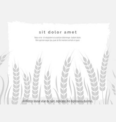 horizontal agriculture poster with wheat branches vector image vector image