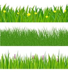 Green spring grass vector image