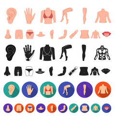 part of the body limb cartoon icons in set vector image