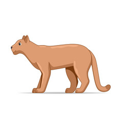 puma standing on a white background vector image