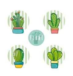 set of cactus cartoons vector image