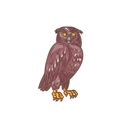 Owl Observing Looking Drawing vector image