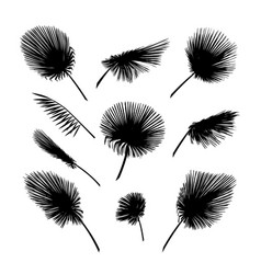 Palm leaves set exotic palm leaf silhouette vector