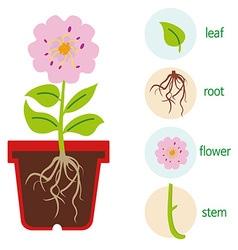 Plant body vector