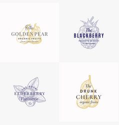 premium fruits and berries abstract signs vector image