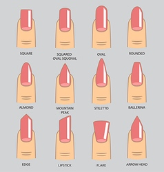 Set of different shapes of nails on gray Nail vector image
