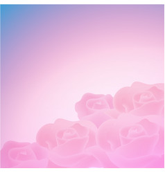 sweet color roses background vector image
