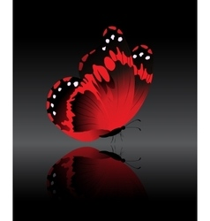 The bright-red butterfly vector