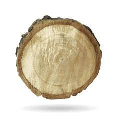 Wood object isolate on white vector image