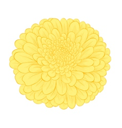 beautiful yellow flower isolated on white backgrou vector image
