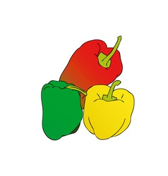 colorful peppers vector image