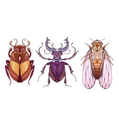 Insect set in color with a tribal pattern doodle vector