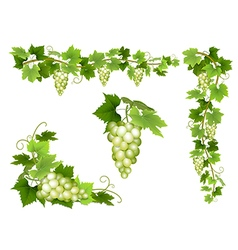 Set of bunches of grapes vector
