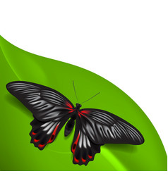 Summer background with butterfly vector