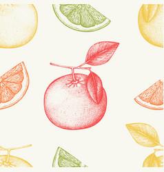 vintage grapefruit background in pastel colors vector image