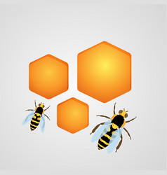 background with bees and honeycombs vector image