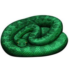 Green rattlesnake on white background vector
