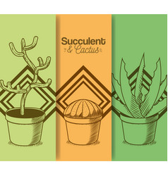 succulent and cactus desert plants vector image