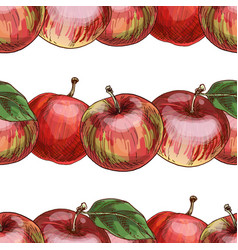 hand drawn close-up red apple pattern vector image vector image