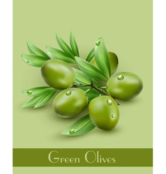 Background with green olives vector