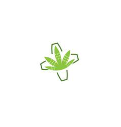 bandage and marijuana leaf a natural bio medicine vector image