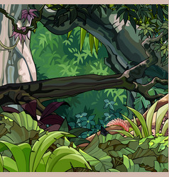 cartoon tropical forest with trees and plants vector image