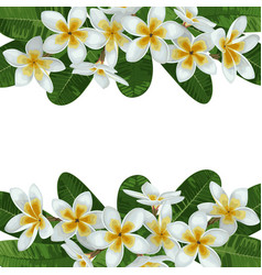 Plumeria tropical border vector