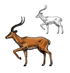 African gazelle or indian antelope animal sketch vector