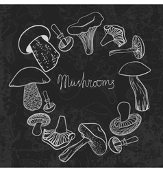 Frame of different hand drawn mushrooms on vector image