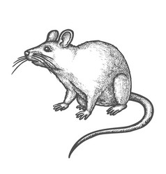 Sketch mouse cute hand drawn rat rodent animal vector
