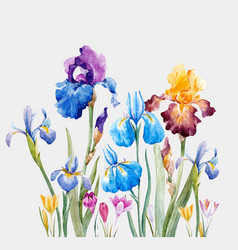 Watercolor iris composition vector