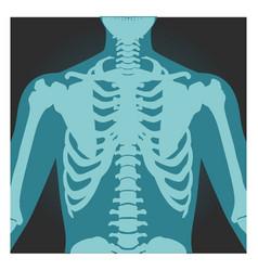 X-ray shot shoulder human body bones vector