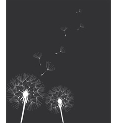 Dandelion blue vector