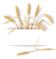 Wheat ears banner vector image