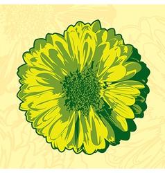 Yellow gerbera vector image vector image