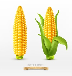 two corn corn on the cob with leaves design elemen vector image vector image