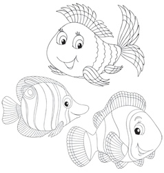 Coral fishes vector image