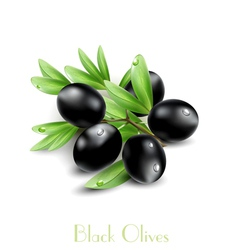 Background with black olives vector